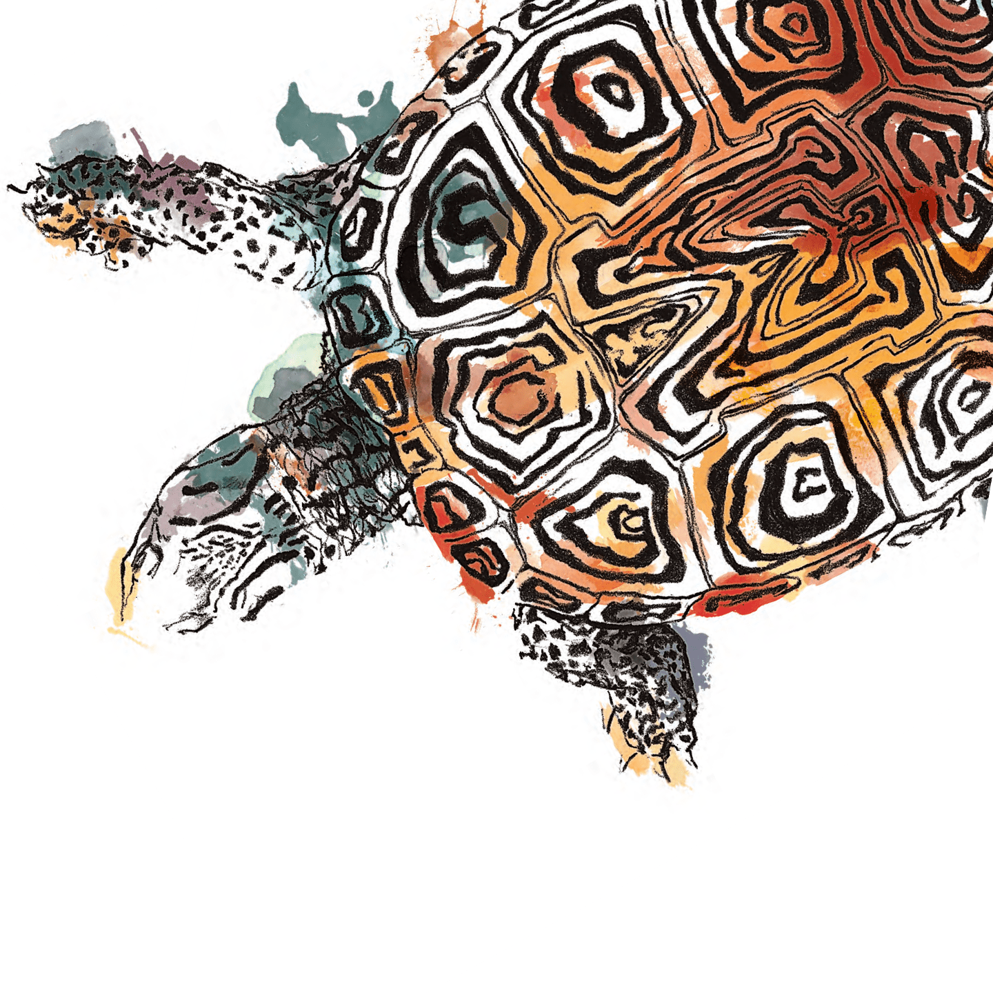 Turtle illustration in watercolor with an M pattern shell